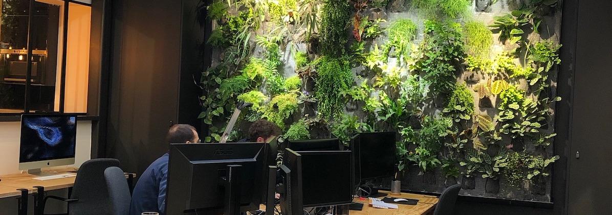 Mur végétal naturel que nous avons installé dans le bureau d'une entreprise, à la vue des personne qui y travaille