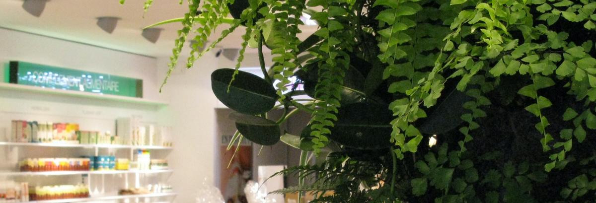 Mur végétal d'intérieur que nous avons installé dans une pharmacie