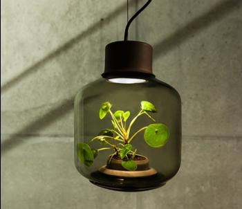 Décoration végétale : lampe terrarium