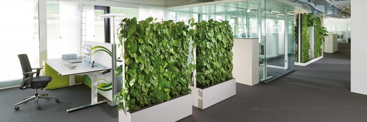 mur végétal installé dans un open space afin de séparer les bureaux