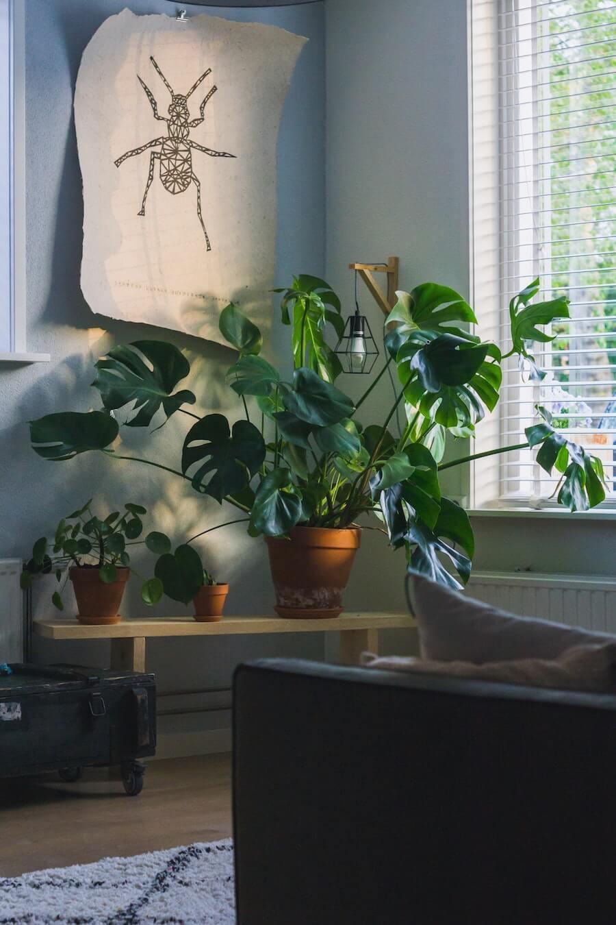 décoration végétale à la maison