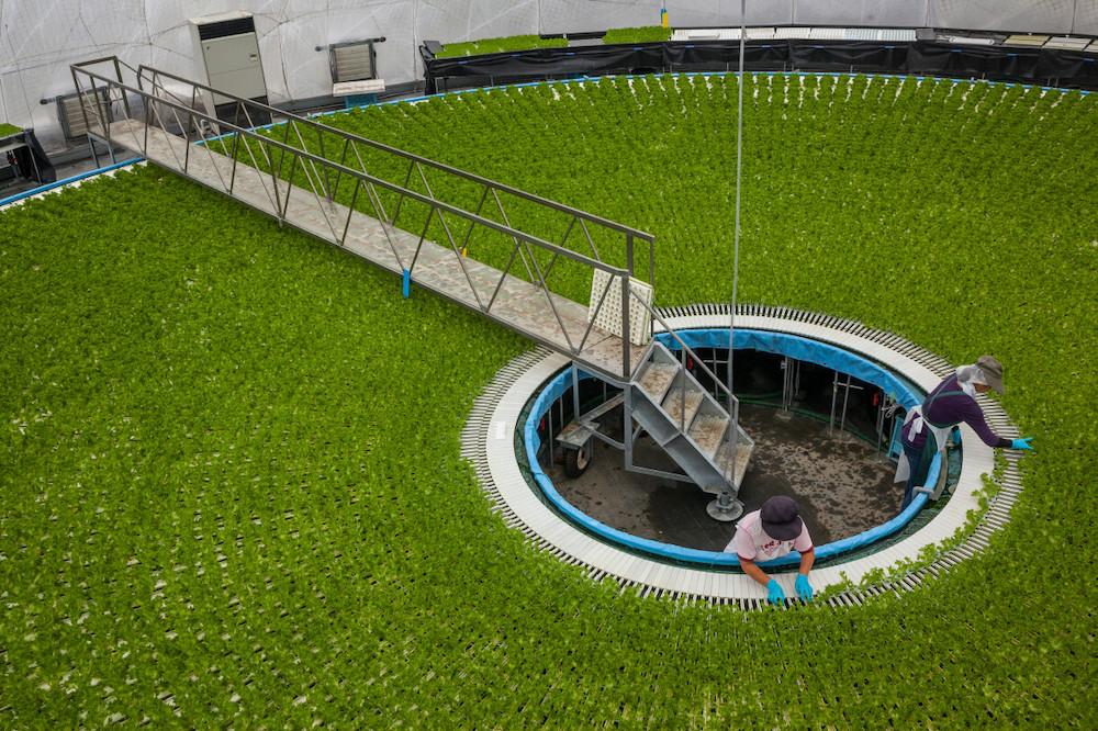 une ferme hydroponique circulaire avec un ouvrier travaillent au milieux