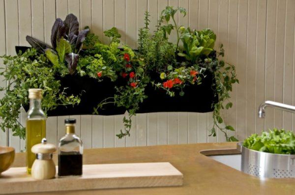 Mur végétal cuisine
