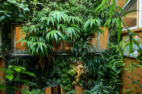 Mur végétal installé chez Patrick Blanc