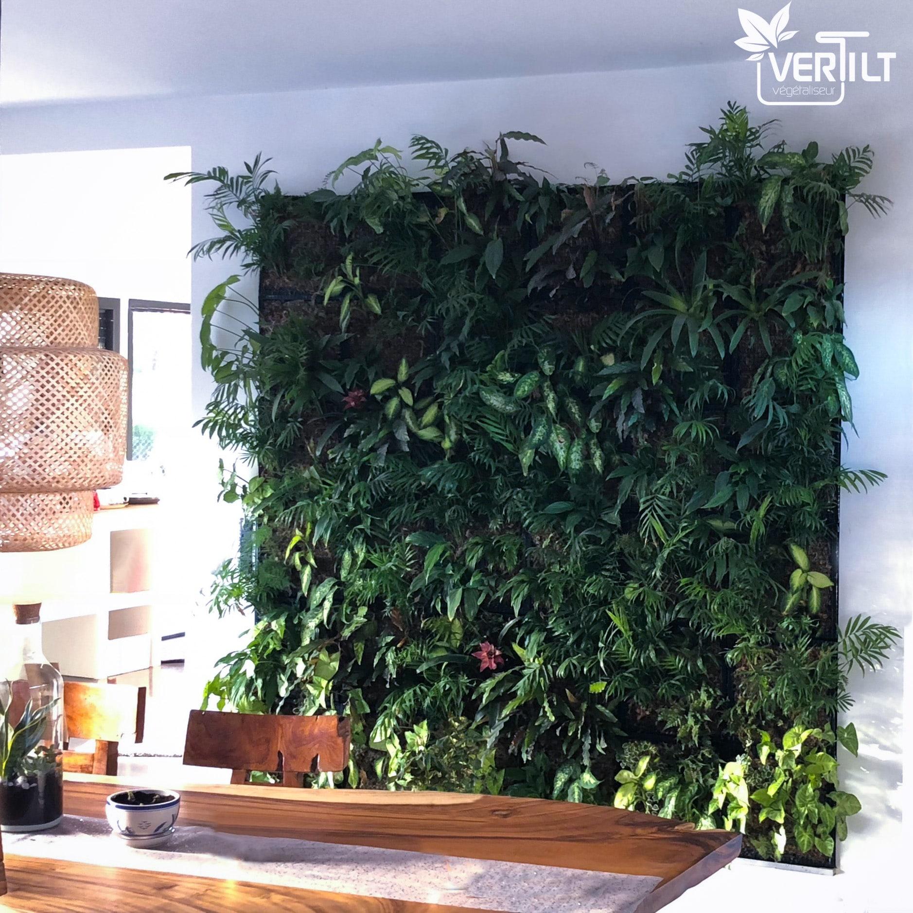 Plantes Pour Mur Végétal Extérieur mur végétal intérieur : quelle technique choisir