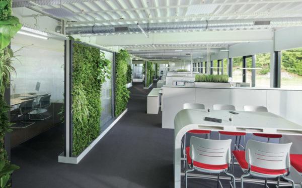 mur végétal open space