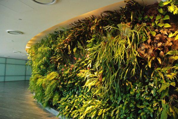 Mur végétal installé par Patrick Blanc