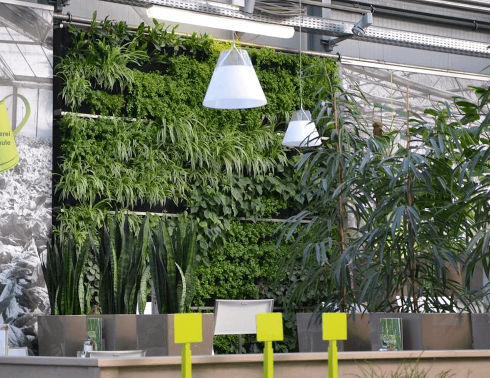 une autre façon de faire un mur végétal