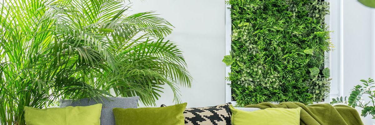 Mur végétal d'intérieur pour particulier
