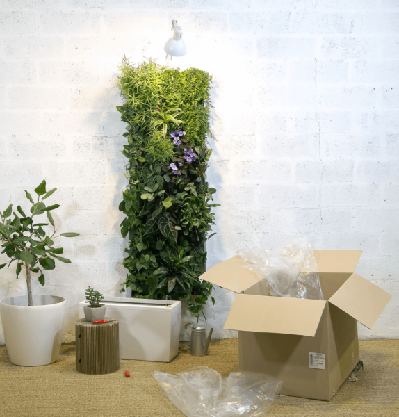 kit de mur vegetal, le deballage
