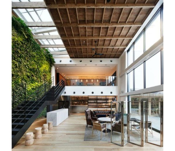 Mur végétal installé dans un loft