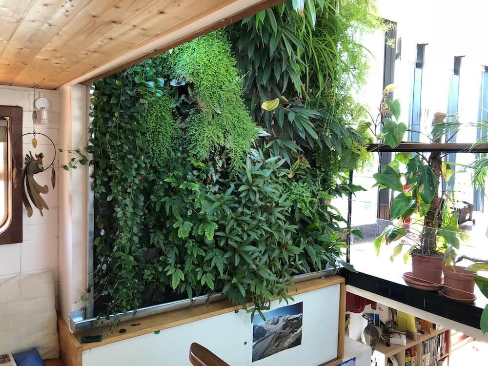mur végétal intérieur installée dans une maison chez un particulier