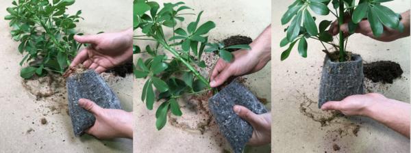 PLANT-R PRO sur mesure