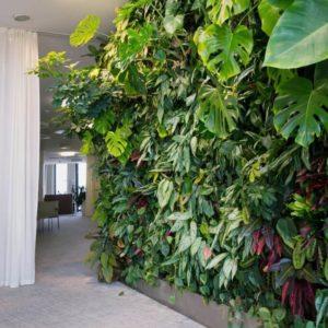 mur végétal intérieur situé dans un couloir