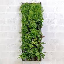 mur végétal - kit pokked