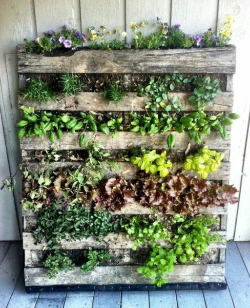 mur végétal extérieur en pallettes en bois