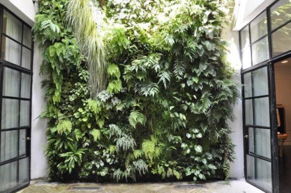 mur végétal dans une court extérieur