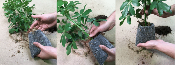PLANT-R PRO technique de preparation des pochettes