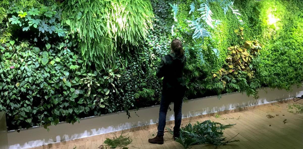 la garantie d'un mur végétal