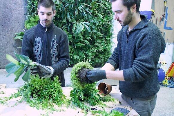 Preparation des pochettes avec des plantes pour la plantation