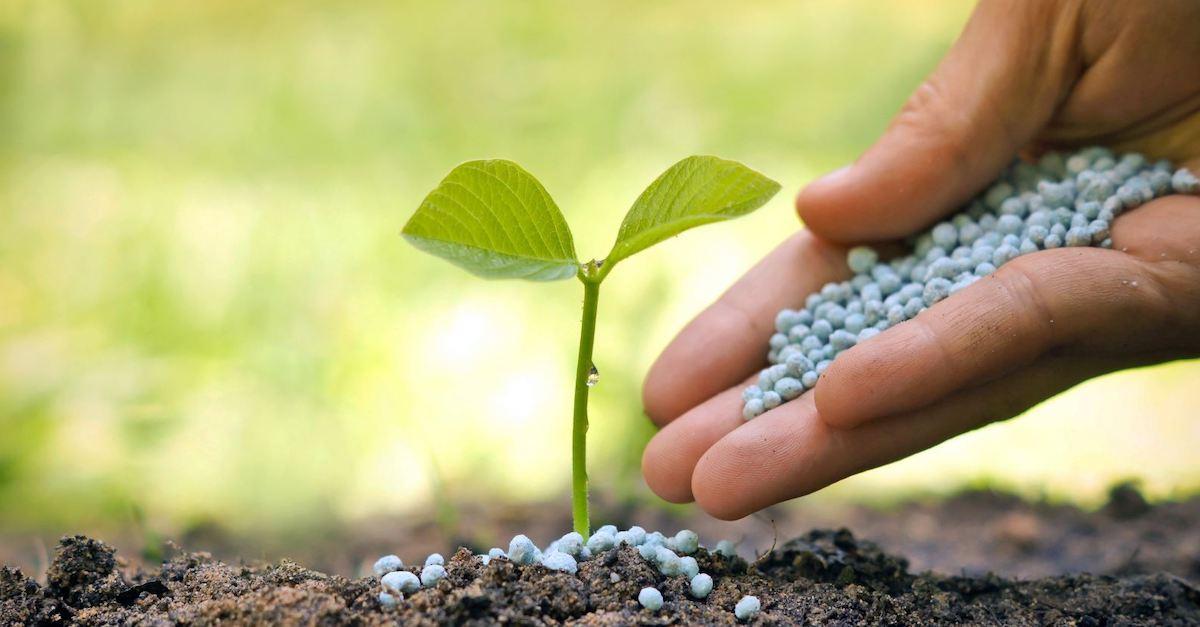 fertilisant pour les plantes