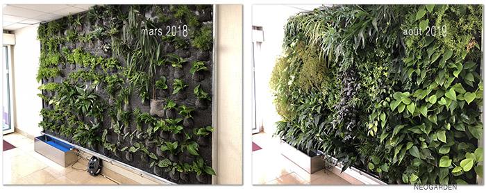 Exemple d'un mur végétal en circuit fermé